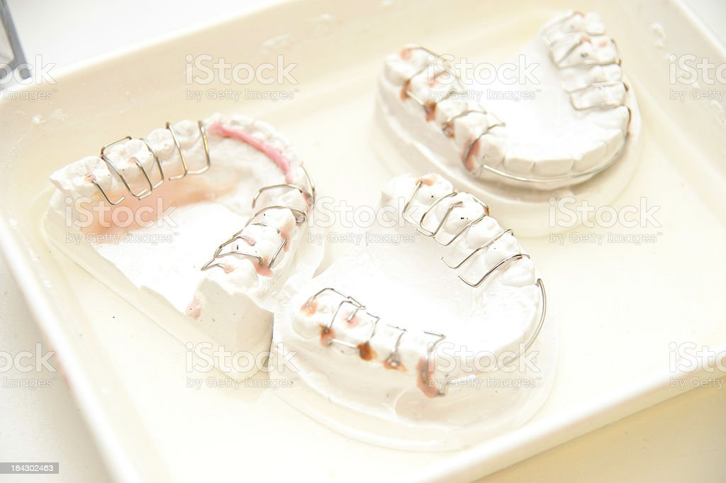 set of teeth in water on gypsum stock photo