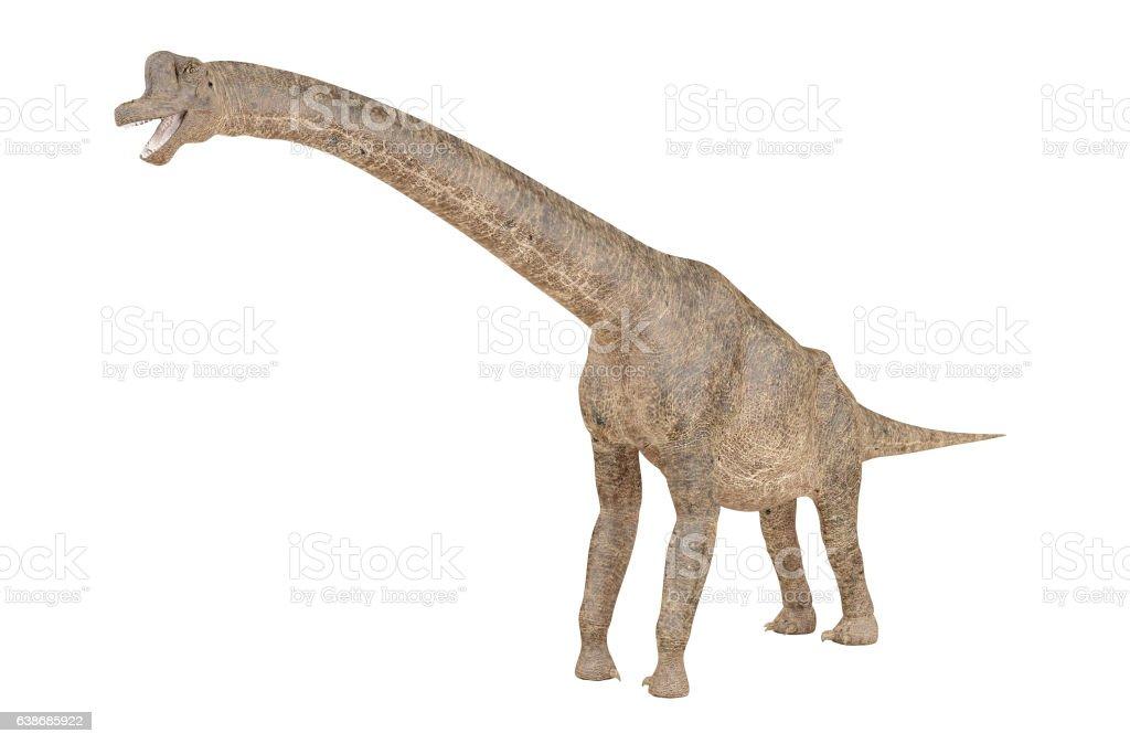 Brachiosaurus dinosaur isolated on white background stock photo