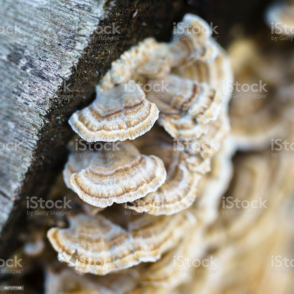 Bracket fungus on the old dead wood stock photo