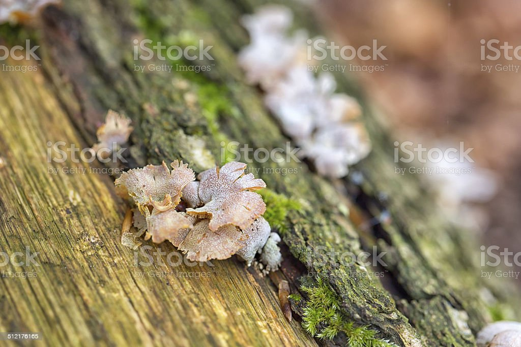 Bracket fungus stock photo