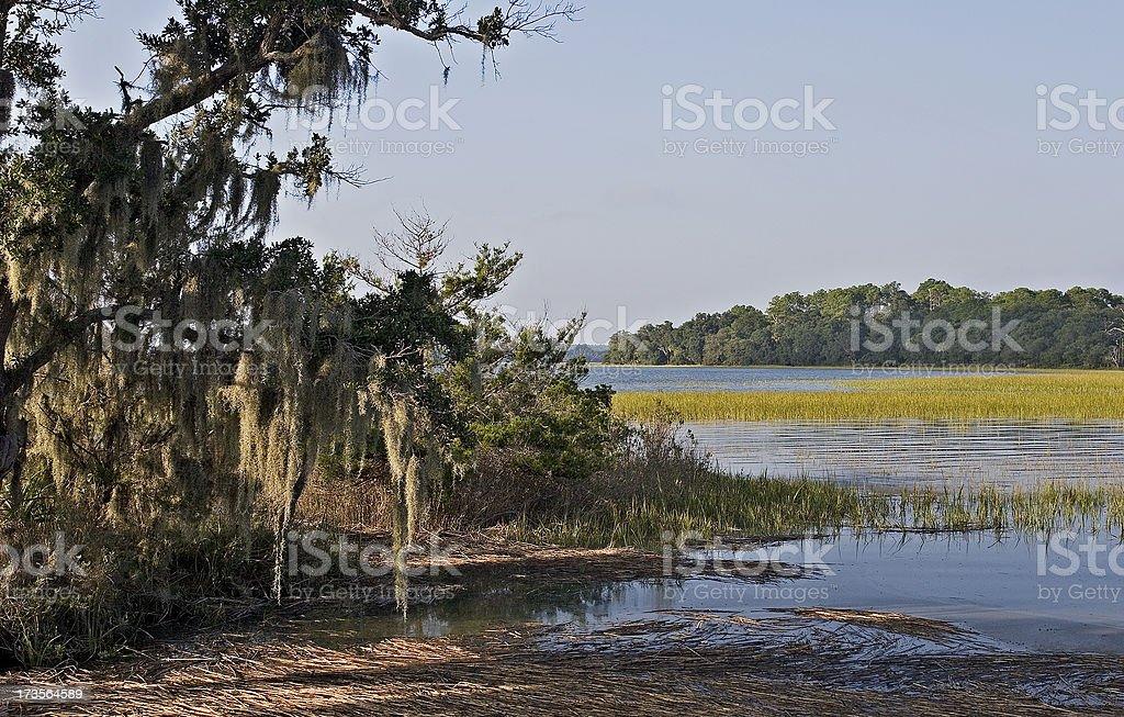 Brackish Landscape royalty-free stock photo