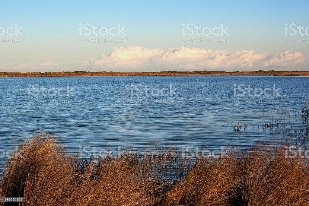 Brackish water lagoon, the Oasis Le Cesine, Italy stock photo