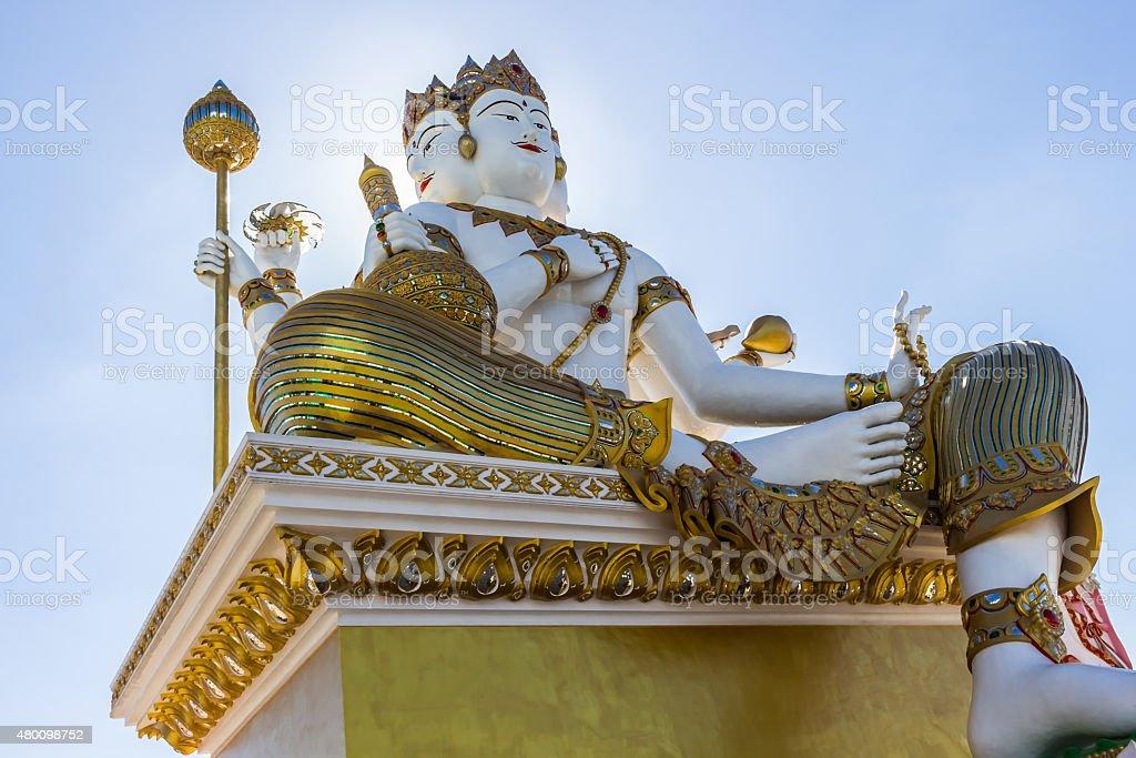 Brahma in the hot sun stock photo
