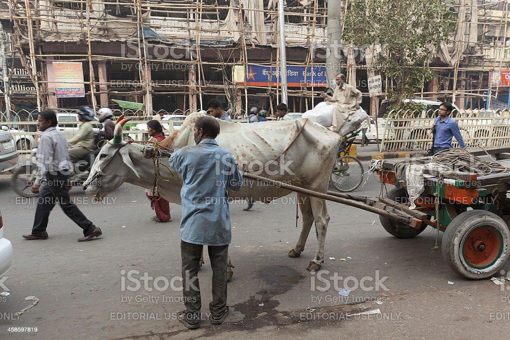 Brahman Transportation stock photo
