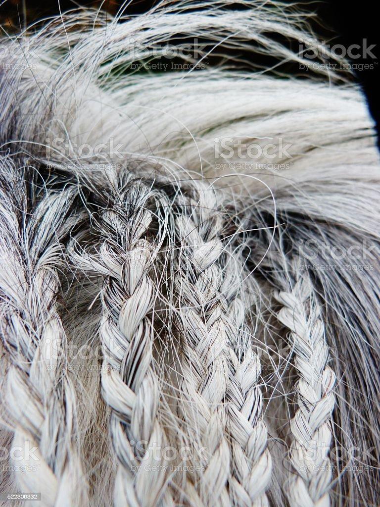 braided horse hair white and grey stock photo