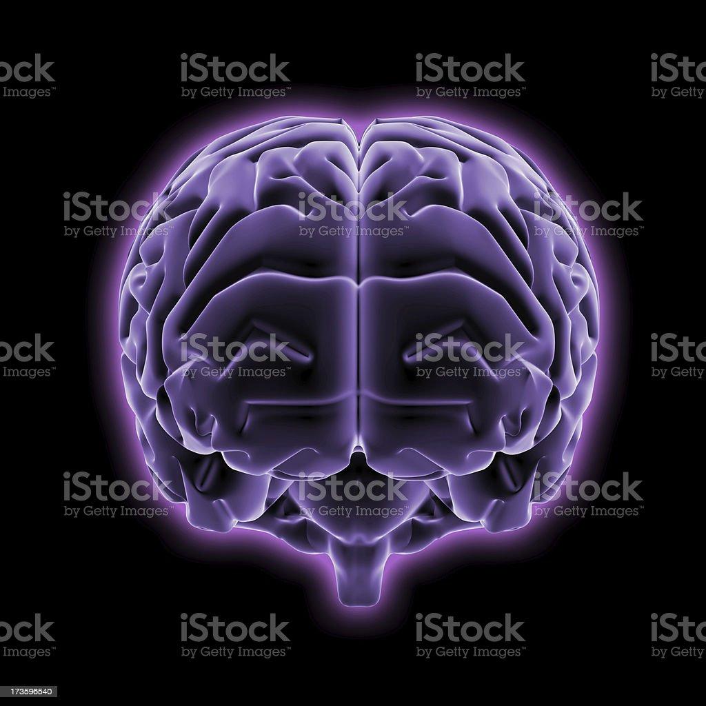 Brain - 3d rendering royalty-free stock photo