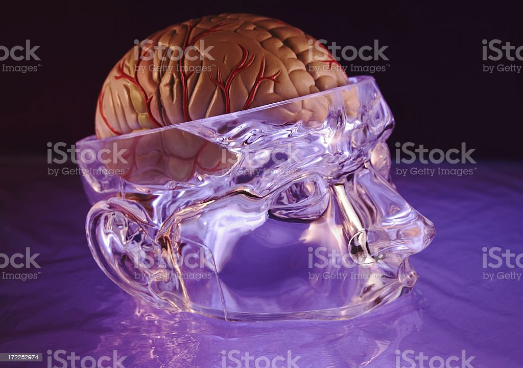 Brain And Face royalty-free stock photo