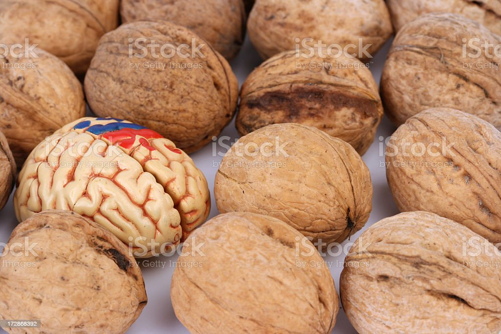 Brain and nuts stock photo
