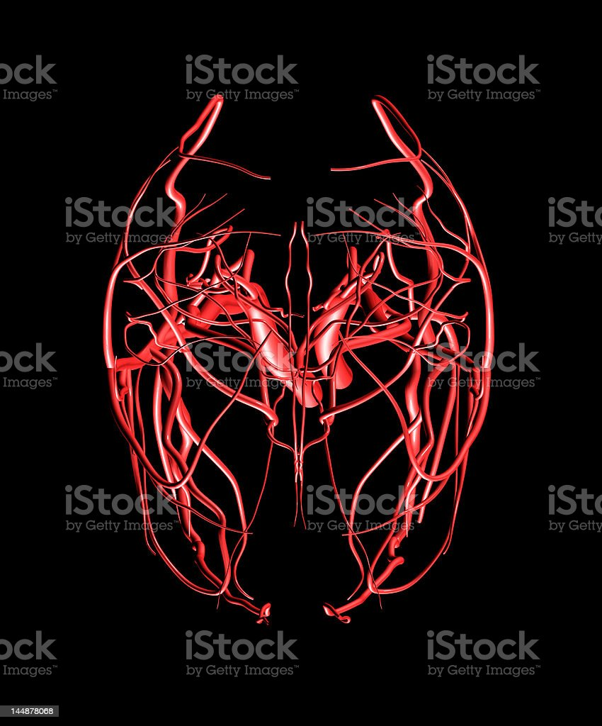 Brain Arteries Top View royalty-free stock photo