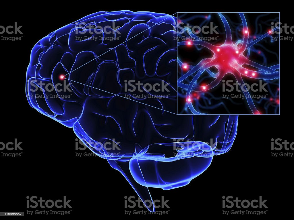 brain illustration royalty-free stock photo