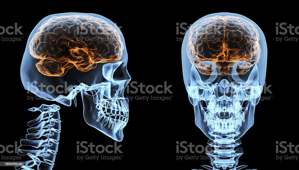 Brain inside skull royalty-free stock photo