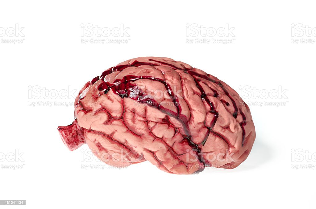 Brain isolated against white stock photo