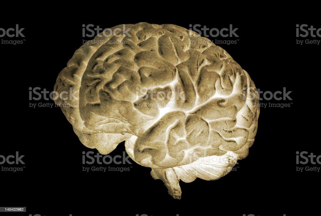 Brain Negative 01 royalty-free stock photo