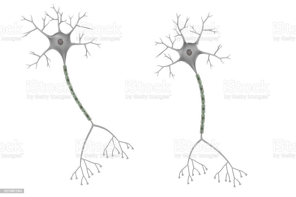 brain neuron stock photo