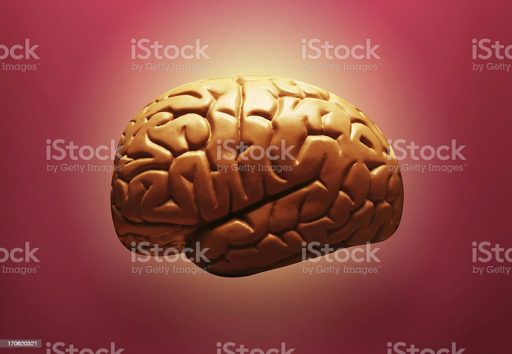 Brain on red royalty-free stock photo