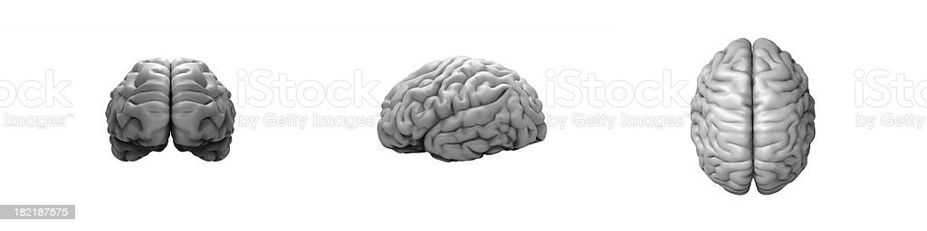 Brain on the white background royalty-free stock photo