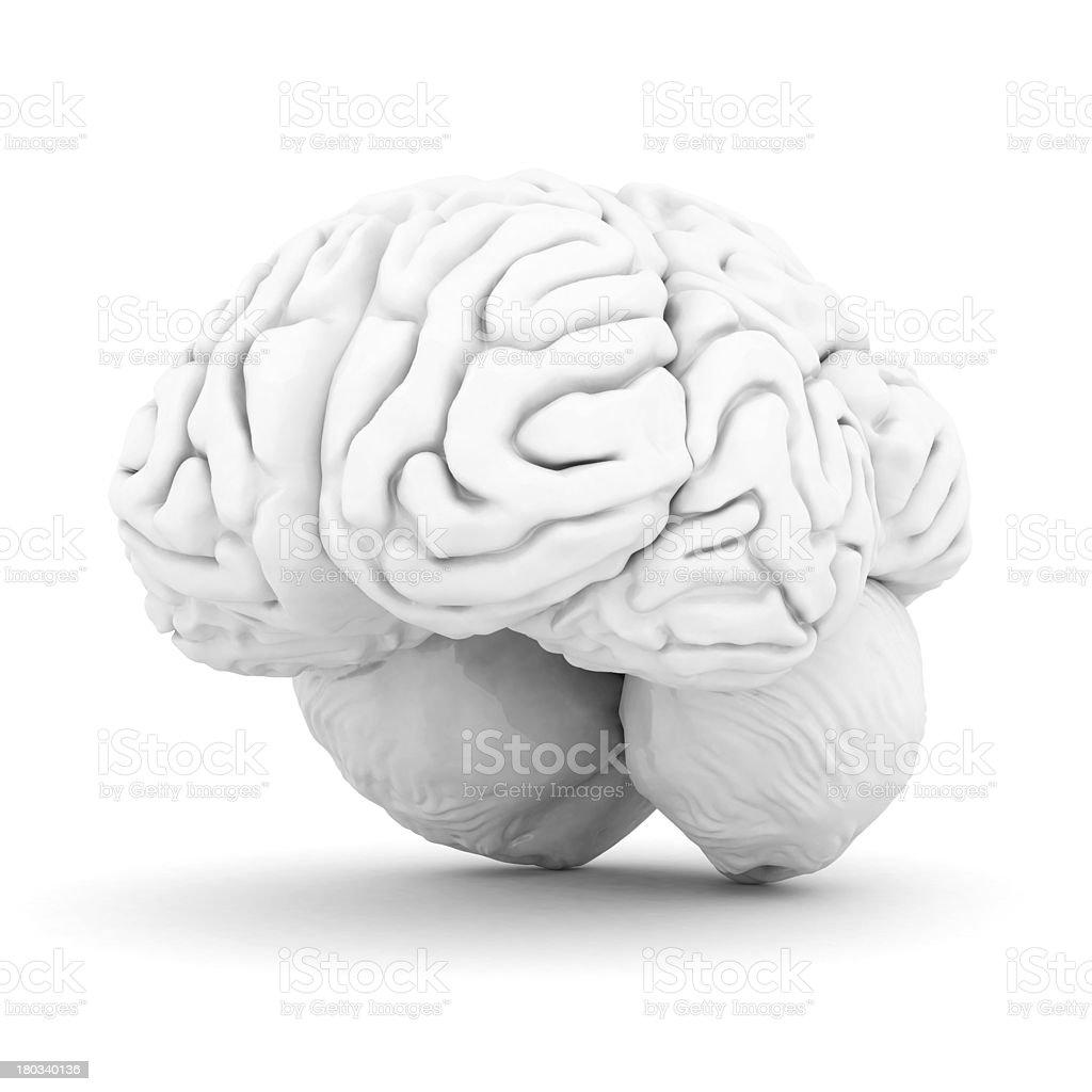 brain on white royalty-free stock photo
