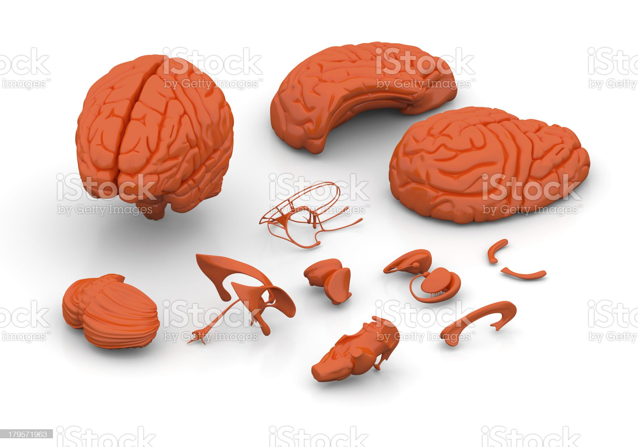 Brain Parts Decomposed - Isolated on white royalty-free stock photo