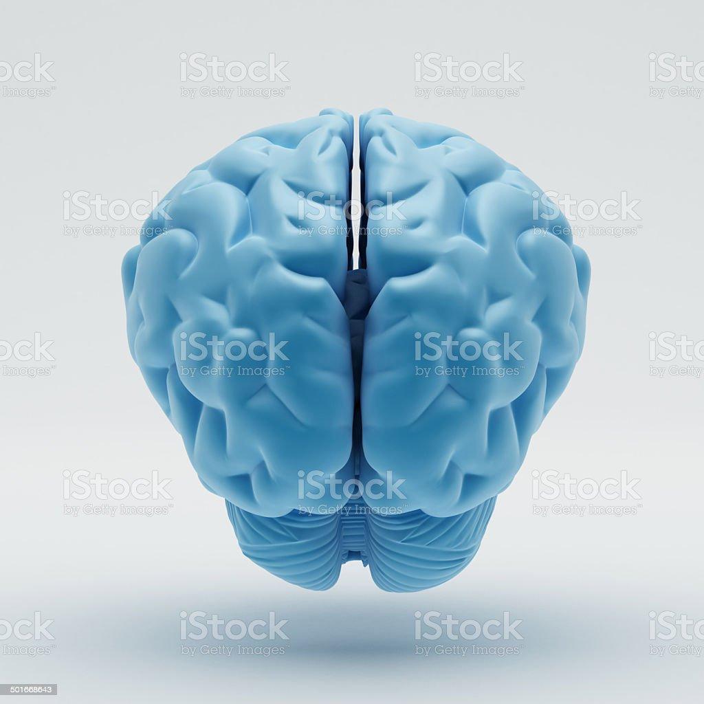 Brain royalty-free stock photo
