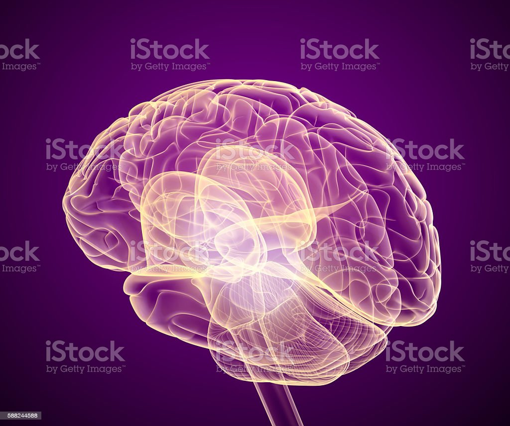 Brain scan, X-ray view stock photo