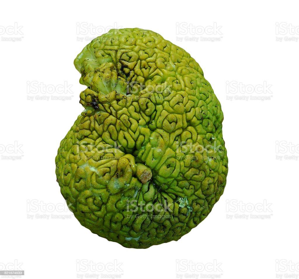 Brain shaped green fruit, Maclura pomifera (known as Osage oranges) stock photo
