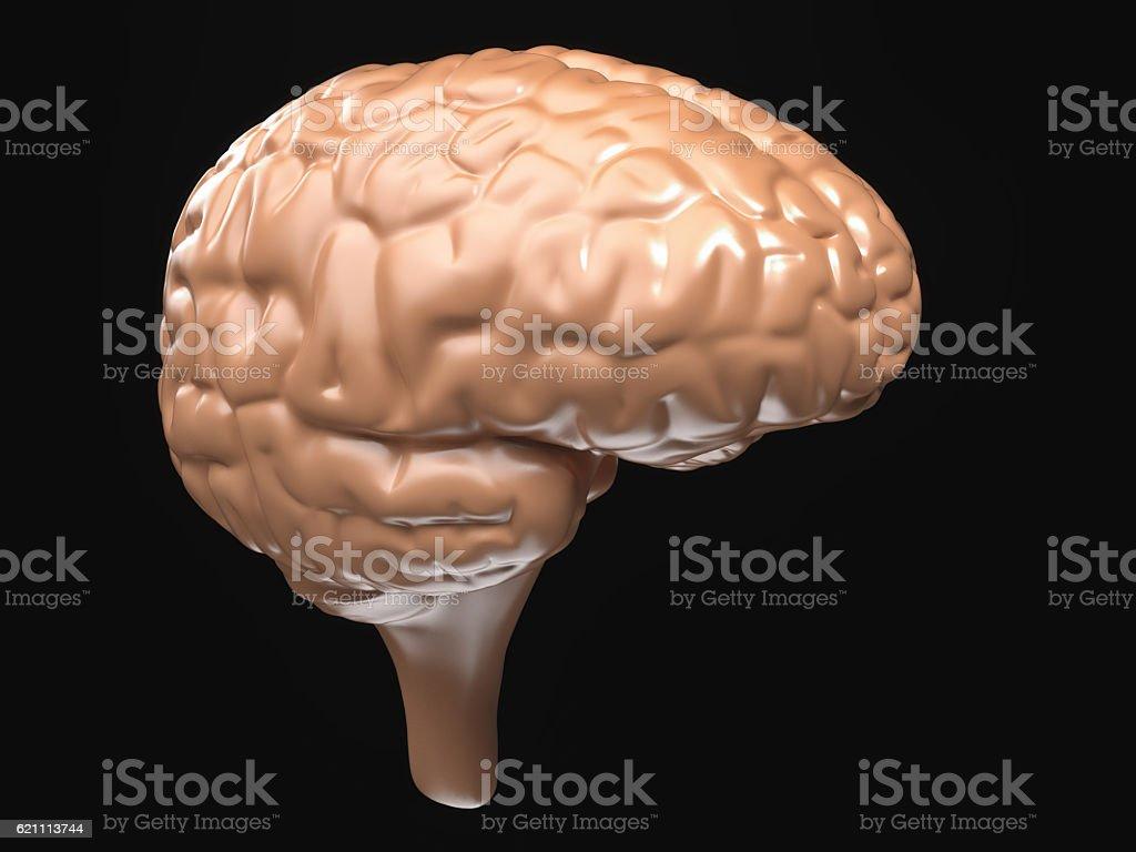 Brain view black background stock photo