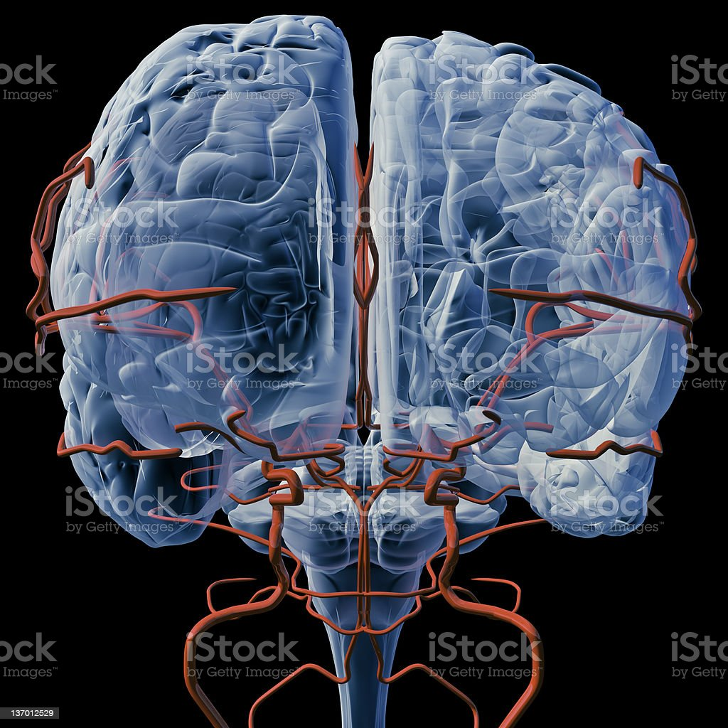 Brain with bloodvessels x-ray (Front) royalty-free stock photo
