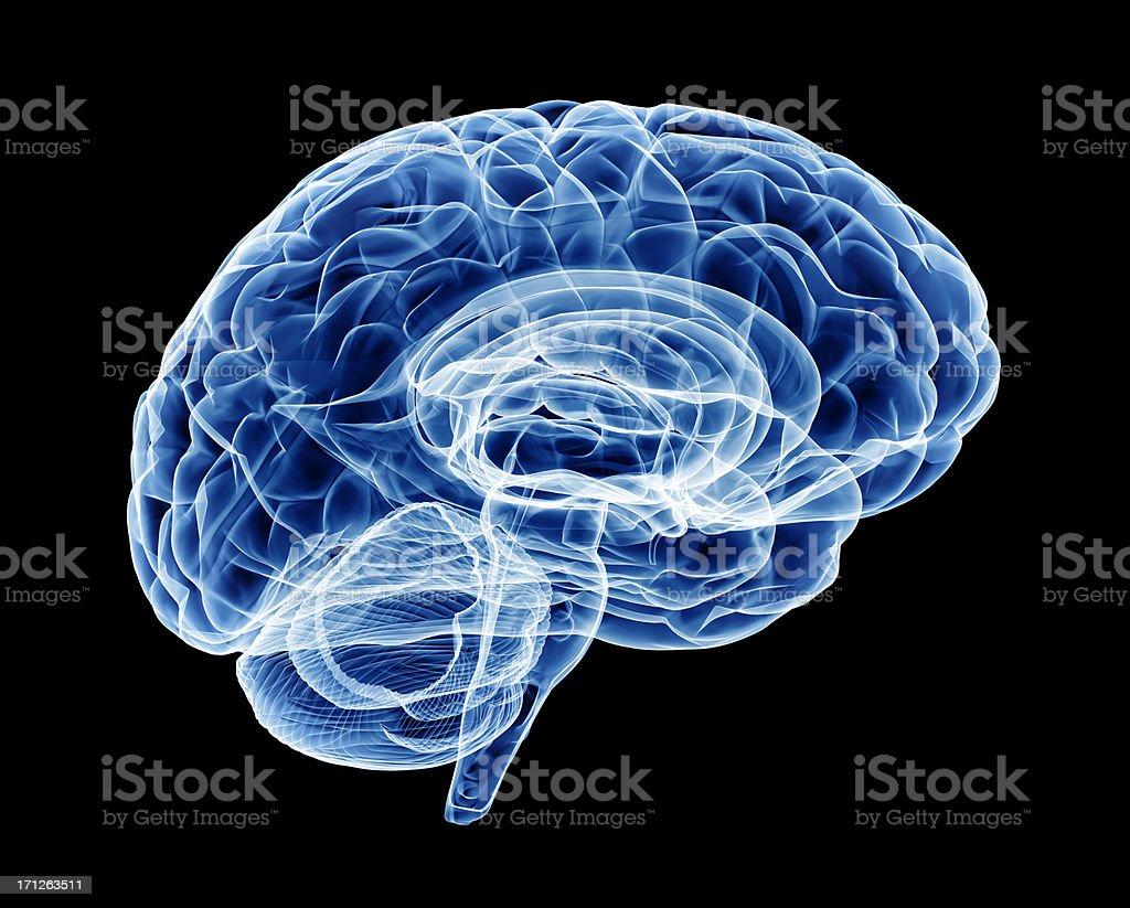 Brain X-ray (HUGE) royalty-free stock photo