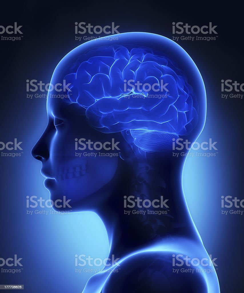 Brain x-ray view stock photo