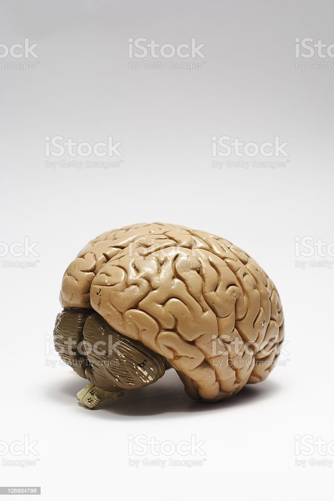 Brains royalty-free stock photo