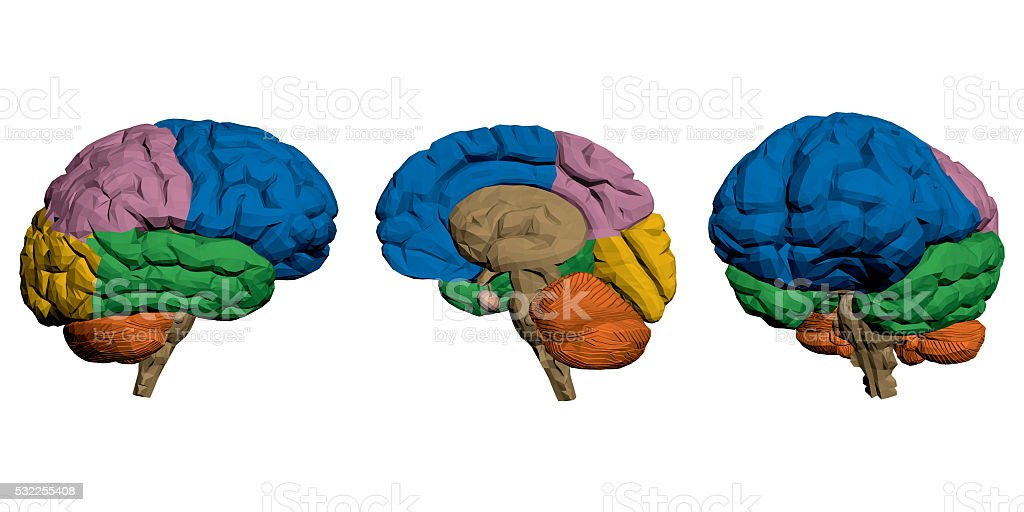 Brains stock photo