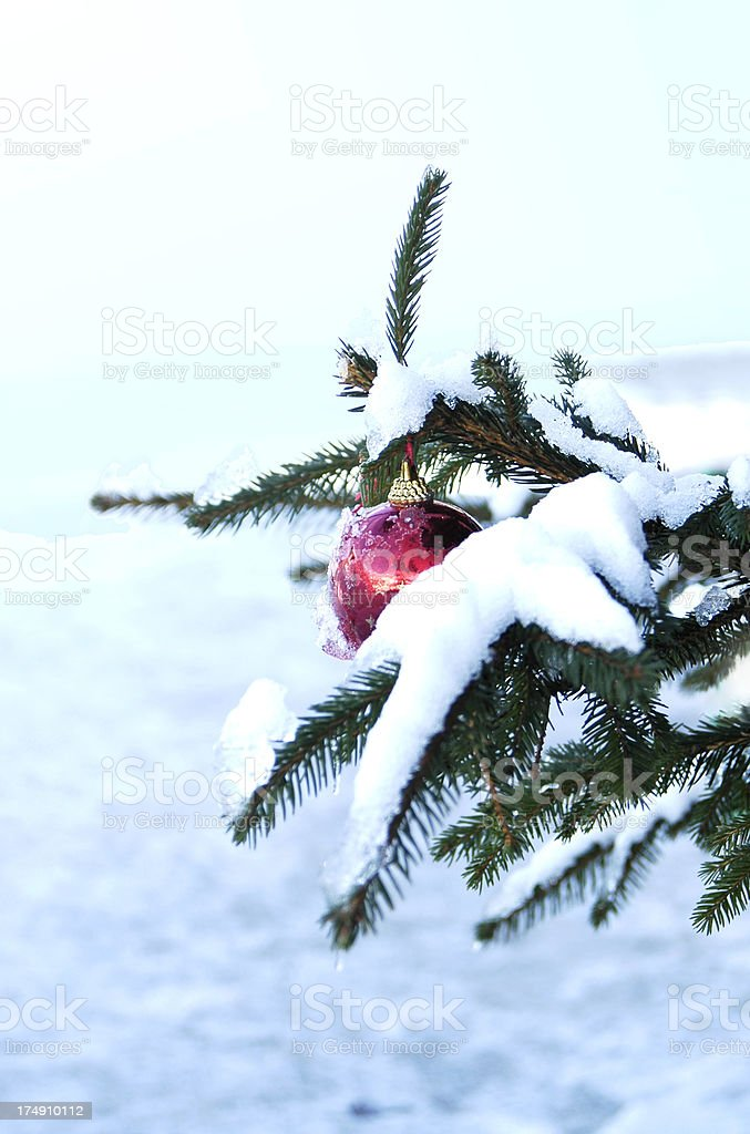 Branch and bauble royalty-free stock photo
