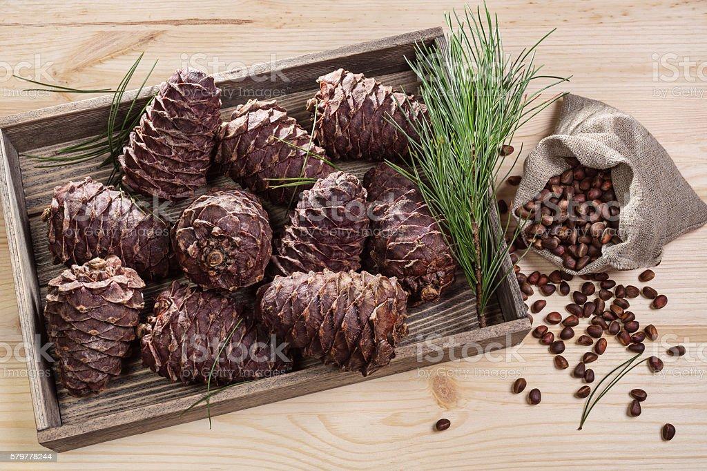 Branch cedar cones and nuts. stock photo