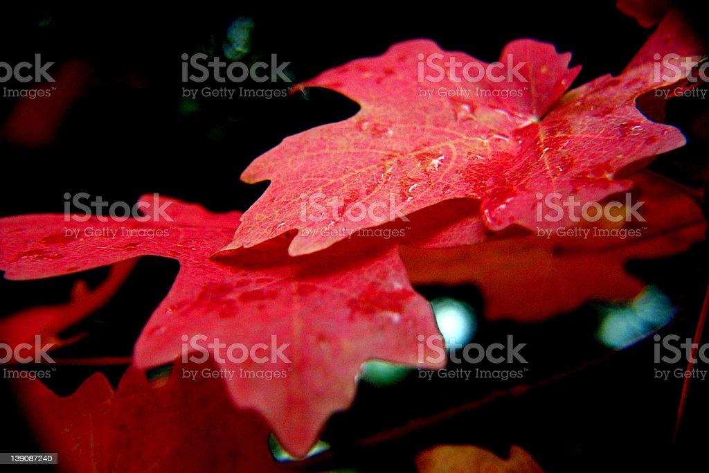 branch fall foliage stock photo