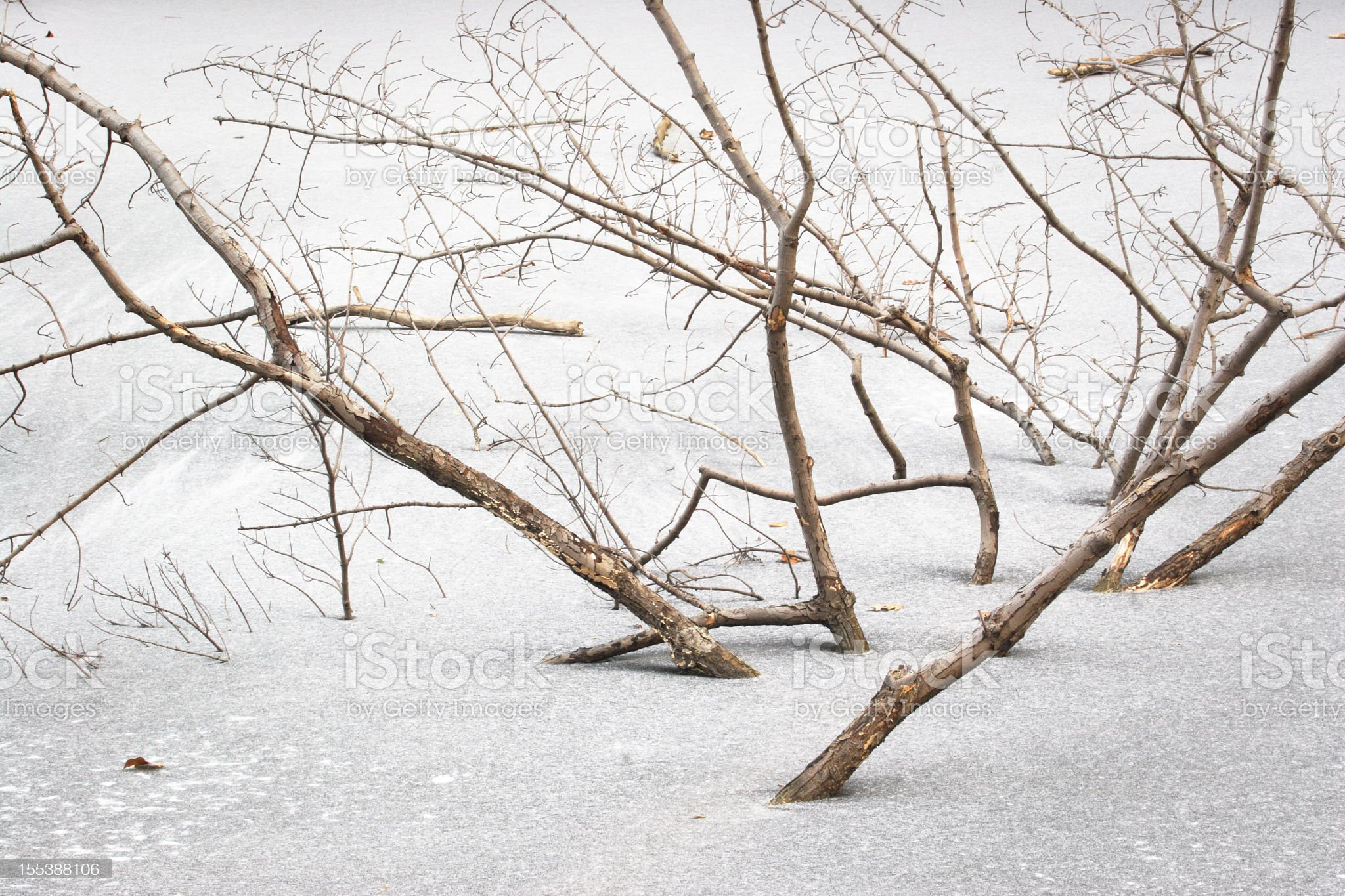 Branch Frozen Ice Submerged Tree royalty-free stock photo