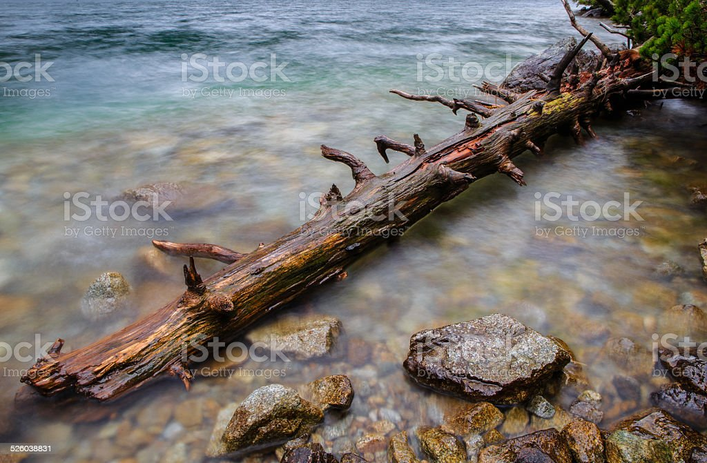 Branch in the crystal water stock photo