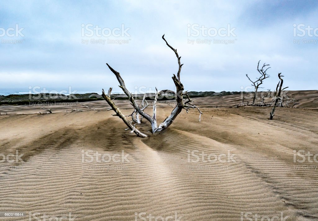 Branch in the dunes stock photo