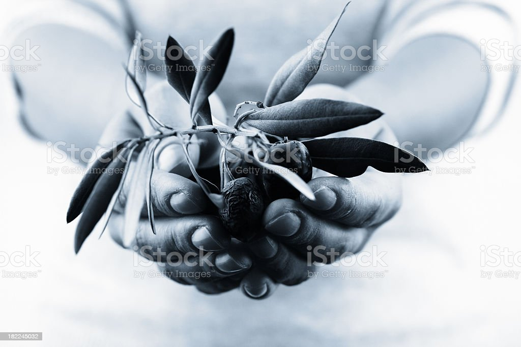 Branch in the hand stock photo