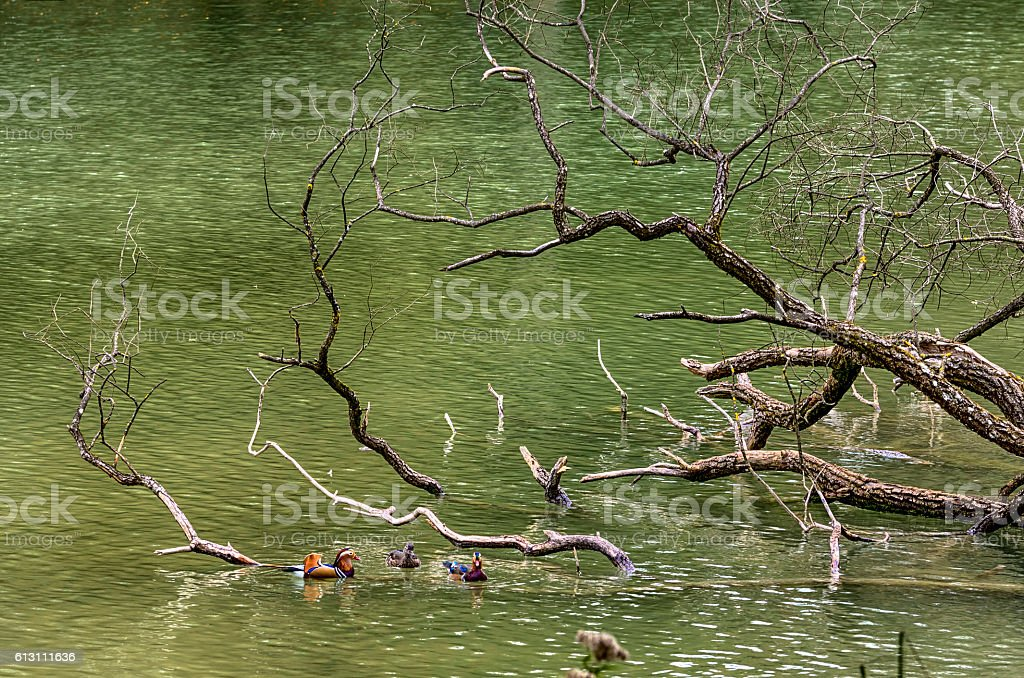 Branch in the Water royalty-free stock photo