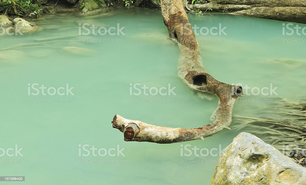 Branch in water royalty-free stock photo