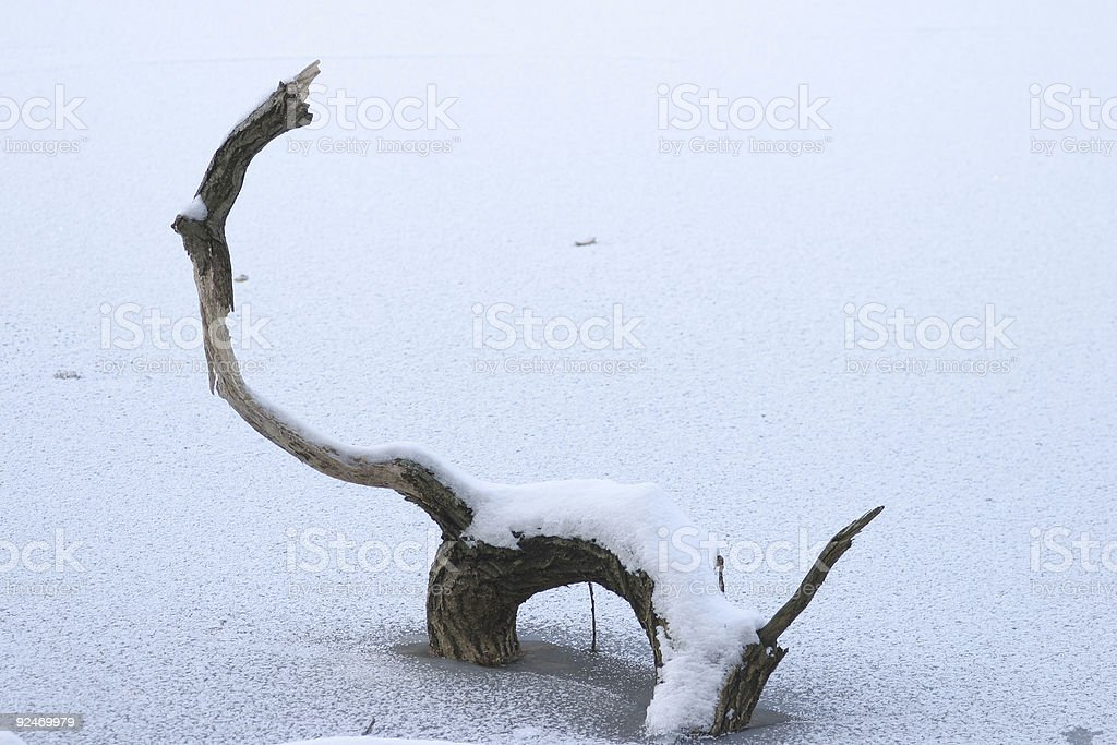 Branch in winter royalty-free stock photo