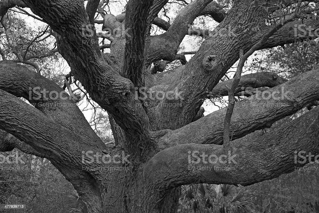 Branch Maze royalty-free stock photo