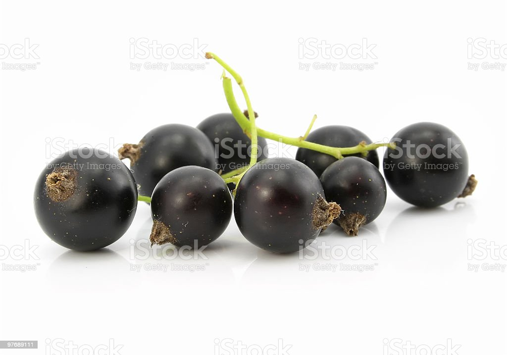 branch of black currant fruits isolated royalty-free stock photo