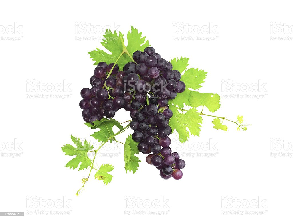 Branch of black grapes with green leaf. Isolated royalty-free stock photo
