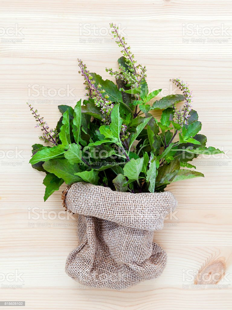 Branch of fresh red holy basil and holy basil flower. stock photo