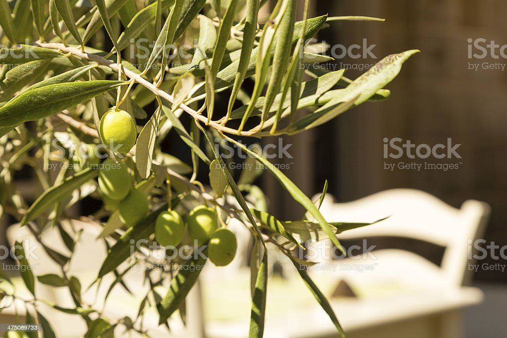 Branch of green olives with table and chair in background stock photo