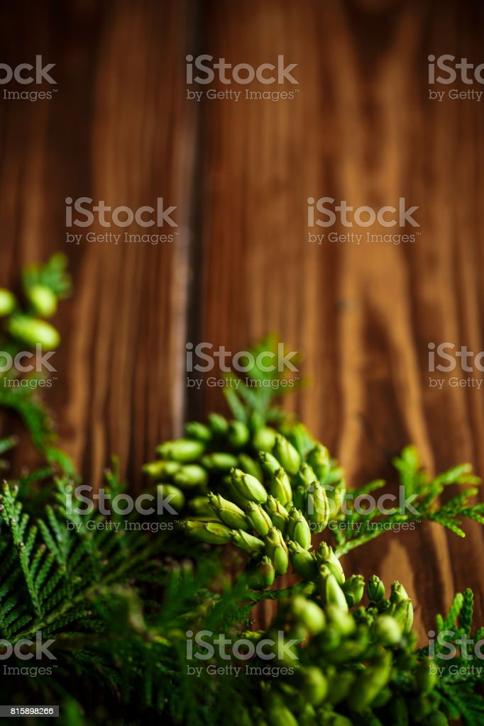 Branch of green thai stock photo