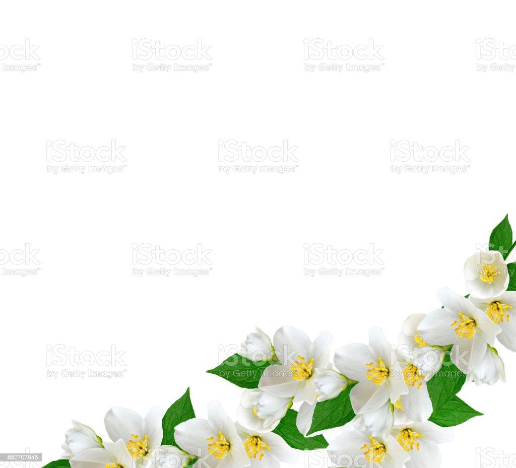 Branch Of Jasmine Flowers Stock Photo 652707846 Istock