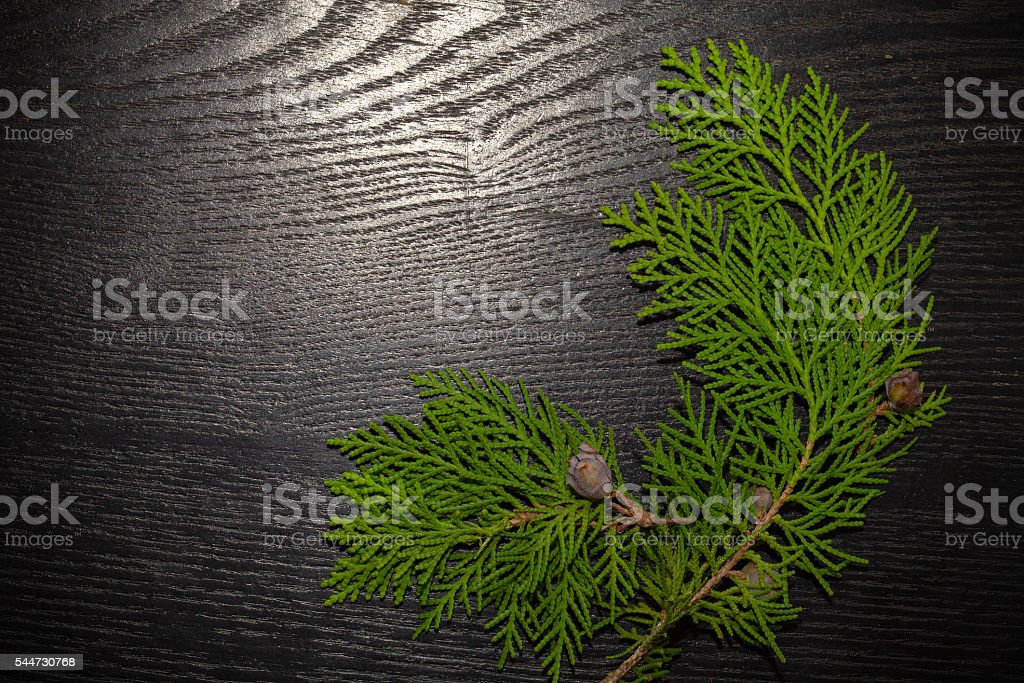 Branch of juniper (Juniperus) tree with cones on black backgroun stock photo
