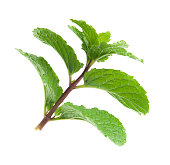 branch of mint